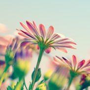 Talleres de mindfulness en madrid